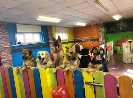 Dogs happy in dog creche
