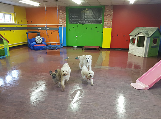 Doggy Day Creche